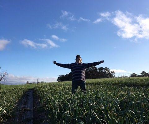 harvest-time-owl-farm-braidwood