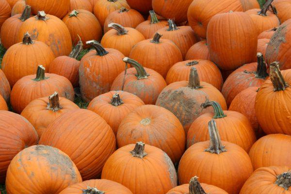 holly-deckert-pumpkin-orange