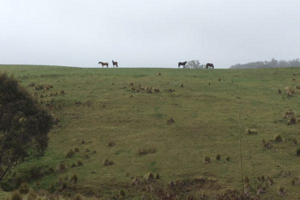 horse_hill