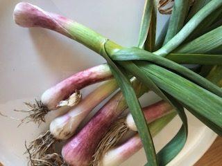 ofb_green_garlic