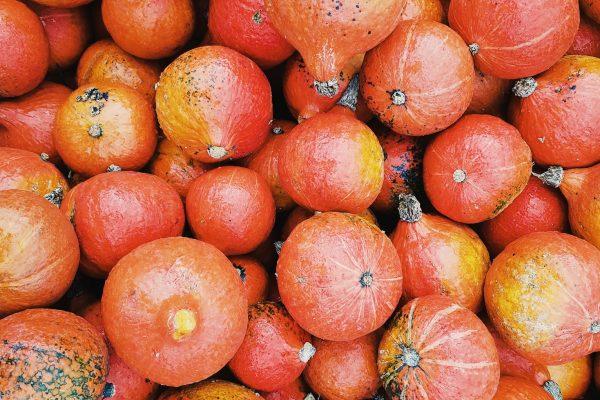 pumpkin-red-kuri