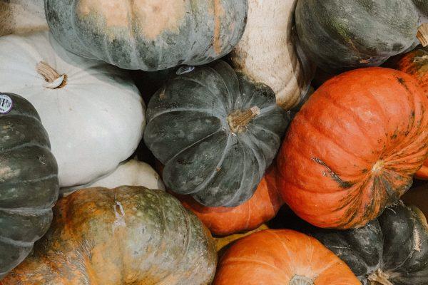 rose-elena-pumpkin-mix